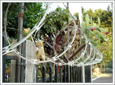 Razor wire for salf
